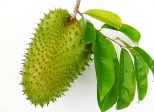 Daftar manfaat daun sirsak