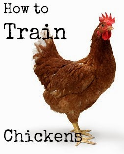 http://proverbsthirtyonewoman.blogspot.com/2012/07/how-to-train-chickens-and-get-them-to.html#.WkVu1nlG0dh