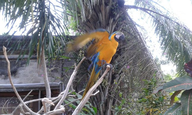 Bali Bird and Rimba Reptile Park - Bali, Holidays, Tours, Attractions, Zoo Park, Tips