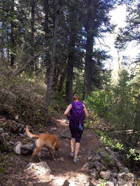 Hiking Icebox Canyon, Wheeler Creek trail, Hiking in Utah with Dogs