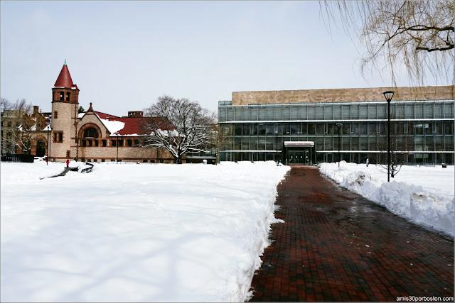 Biblioteca Pública de Cambridge después de la Tormenta Skylar