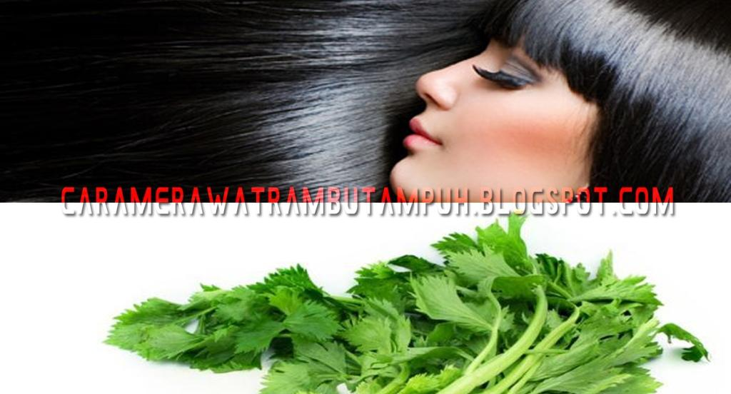Manfaat Seledri untuk Rambut dan Cara Penggunaannya