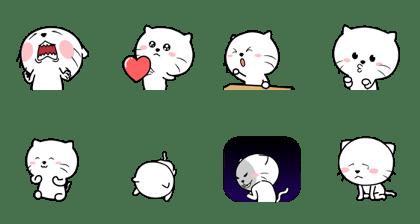 Cutest Cat