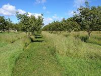 verger noieraie arbres herbe tondeuse naturelle ecologique