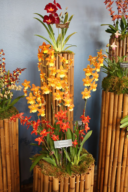 Orchids of every color combination inspire and even beckon contemplation.