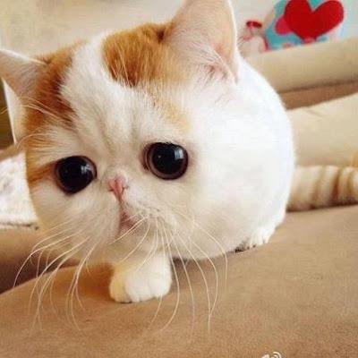 il gatto più carino del mondo