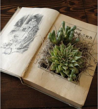 Buku bekas dimanfaatkan sebagai pot succulent.