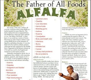 Alfalfa - Raja Tumbuhan