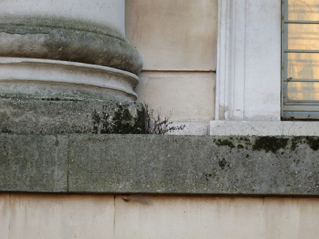 Dead plant on window sill by column at Ashmolean Museum, Oxford