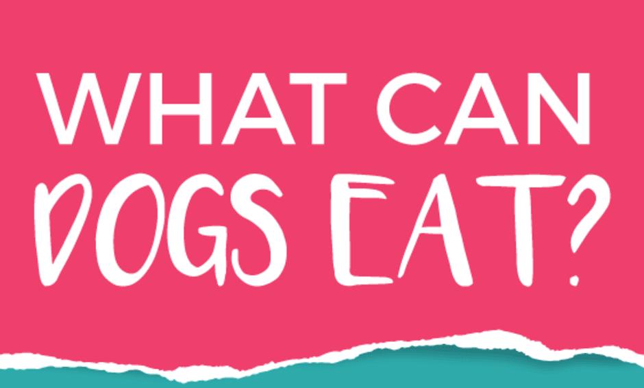 Chó cưng của bạn có thể ăn gì?