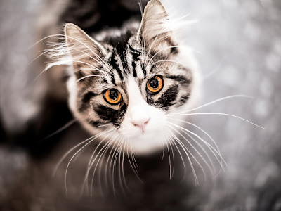 cat normal resolution hd wallpapers 24