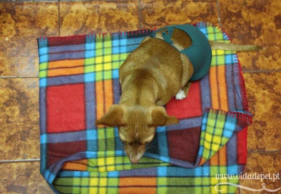 após castração + após esterilização + blogue de animais de estimação + vida de pet