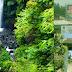 Menikmati Kesegaran Alam Objek Wisata Curug Muara Jaya, Majalengka