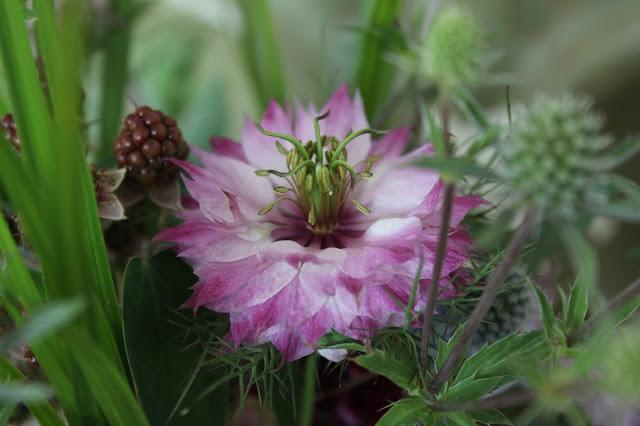 Wiesenblumen Strauss Flower Power Bloggers at Jules kleines Freudenhaus