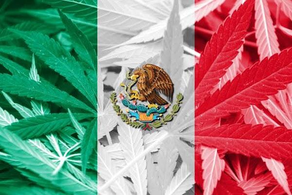 Suprema Corte de México posibilita uso recreativo de marihuana e internet explota.