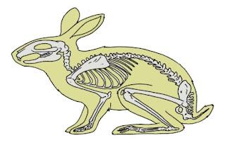 organ-gerak-kelinci-halaman-13