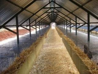 Τσουχτερά τα πρόστιμα για τα εκτροφεία γουνοφόρων ζώων