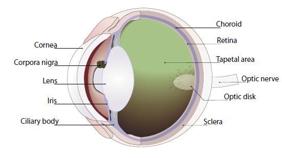 Bedah Laserasi Kelopak Mata pada Hewan (Bedah Veteriner)