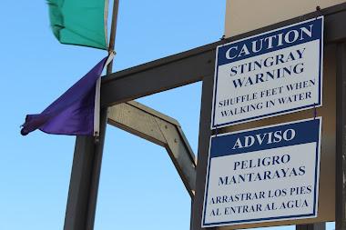 What S A Purple Flag Mean