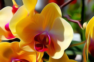 Orchideen, orgideë, orchids, Orhideje, Орхидеи, orkideer, Orhideed, Orkideat, orchidées, anggrek, magairlíní, brönugrös, Orchidee, orquídies, orhideje, orhidejas