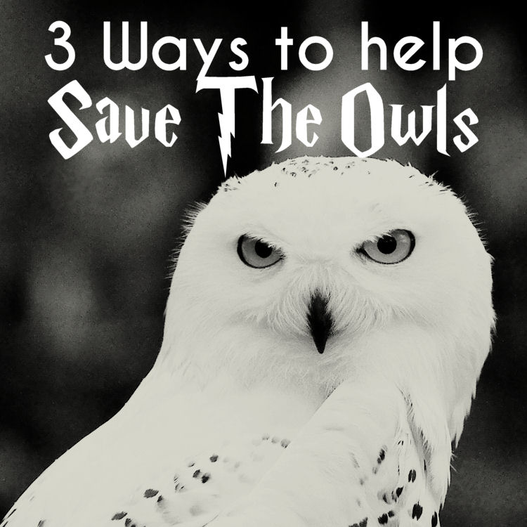 owls are not pets: how to save harry's faithful friend hedwig