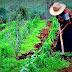 Agroindustria destinó fondos a comunidades indígenas de Salta