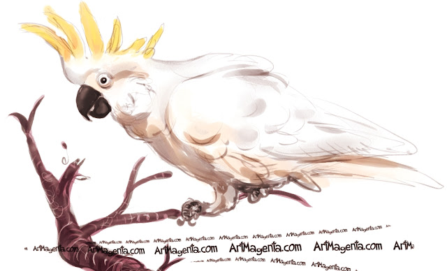 Sulphur-crested Cockatoo sketch painting. Bird art drawing by illustrator Artmagenta