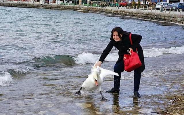 Una mujer mata a cisne para tomarse una selfie con él