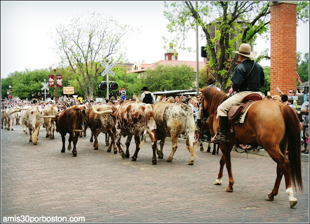 Vaqueros y Ganado en Fort Worth Stockyards, Texas