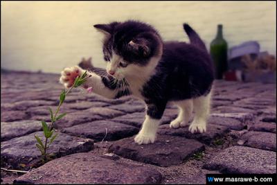 صور صور قطط كيوت 2020 خلفيات قطط جميلة جدا cats26.png