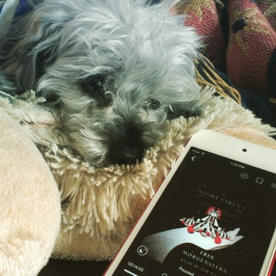 Murchie lays with his head drooping off the edge of a fuzzy white pillow shaped like a sheep. Immediately before him is a red iPod with The Night Circus's cover on its screen. The cover features a black, white, and red circus tent topped with a clock and cupped in the palm of a pale hand against a black background.