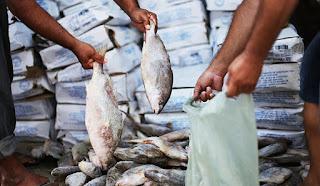 Resultado de imagem para peixe da semana santa