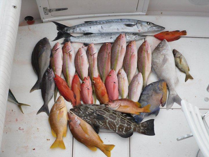 Bote en Cozumel para paseos