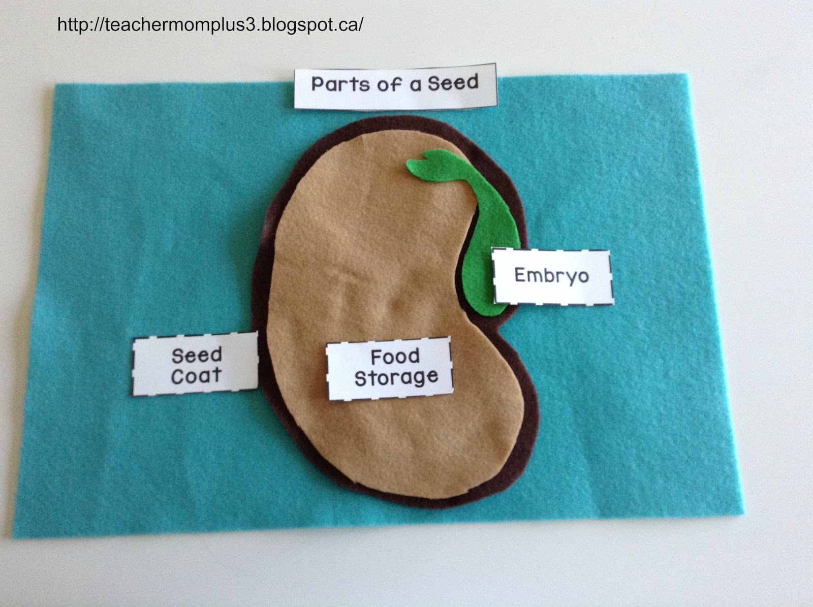 Teachermomplus3 Parts Of A Seed Felt Puzzle Free Printable
