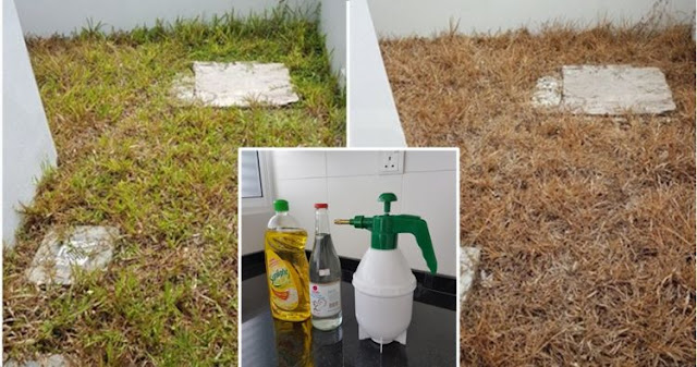 Cara Membuat Sendiri Racun Rumput Dengan Resep Sederhana