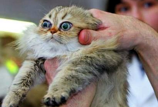 Your Source of Randomness: WTF Kitty Pictures