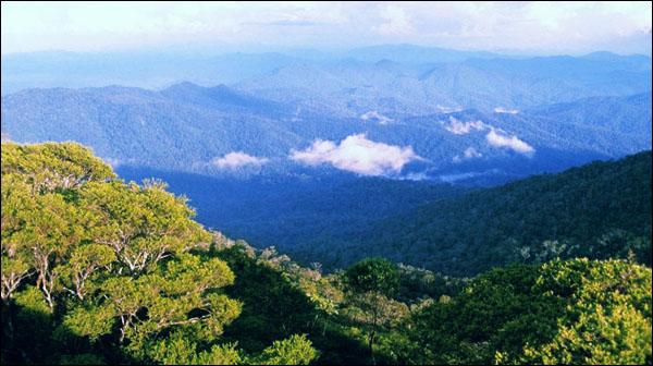 Wisata Alam Taman Nasional Gunung Palung di Ketapang