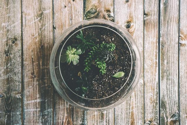 Abono orgánico en tus plantas