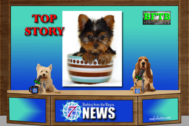 BFTB NETWoof News top story on the brewery BrewDog paw-ternity leave.