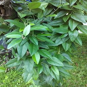 tanaman obat, herbal alami, sehat alami, jamu hijau, life insurance