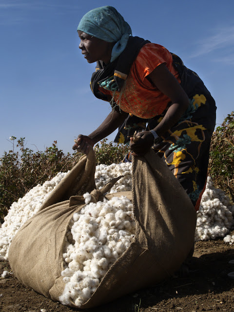 Cotton accounts for $3.3 billion, the majority of the African country of Benin revenue