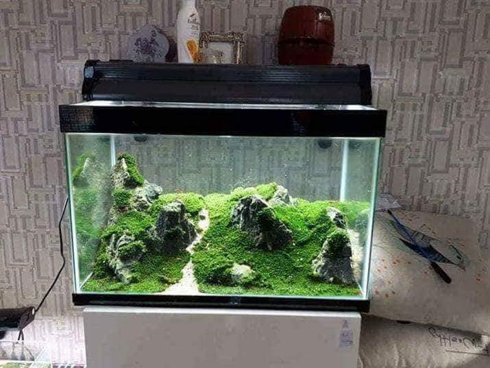 Bể thủy sinh đồi núi chơi rêu mini fiss của bạn Hạo Nam