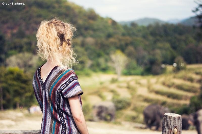chiang mai elefanten park pflege