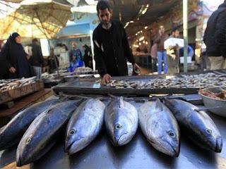 أسعار الأسماك  في السوق المحلي اليوم وسوق العبور للجملة