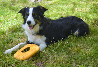 Durable floating soft dog disc