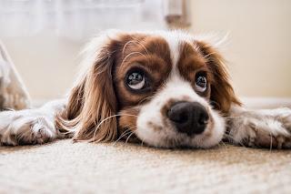 bermimpi di kencingi anjing
