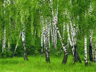Энергия и магия лекарственных трав: где и как использовать, Энергетические магические и обережные свойства растений: где и как использовать, талисманы и обереги, народные поверья, как очистить дом с помощью растений, http://prazdnichnymir.ru/