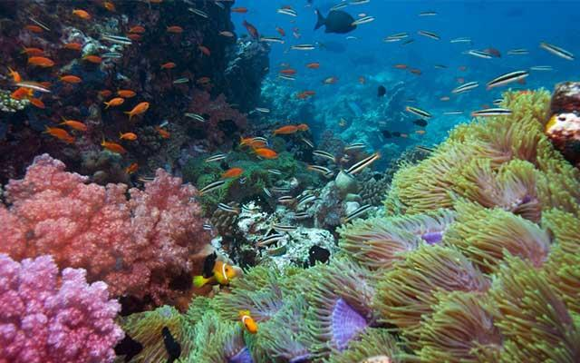 Go diving in the Zanzibar Archipelago