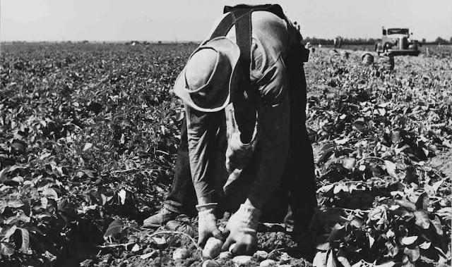 Trabajador y economia de la agricultura
