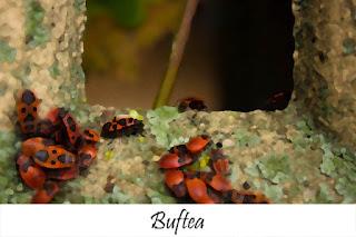 http://www.lostinnature.net/p/buftea.html